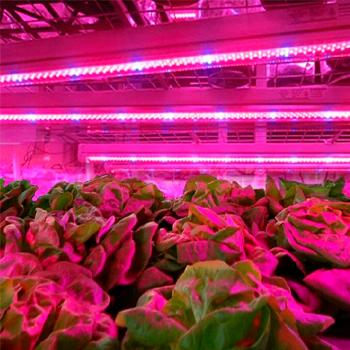 світильники для рослин