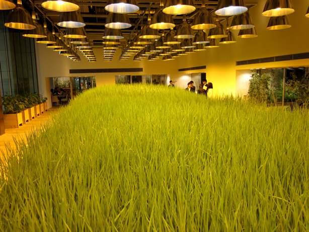 освітлення рослин металогалогеновими лампами