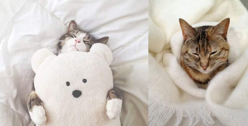 коты для тепла